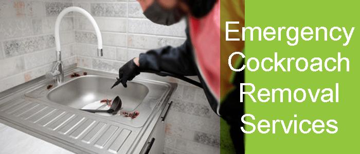 Emergency Cockroach Removal Service