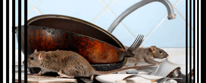 Finest Rat removal services