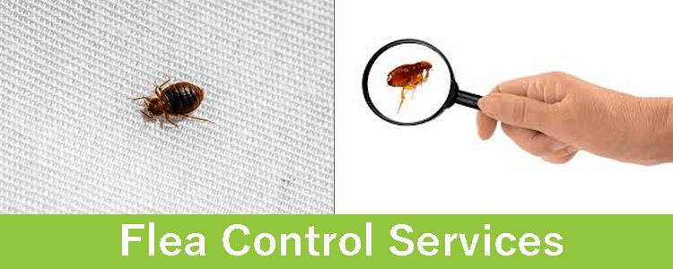 Flea Control Services