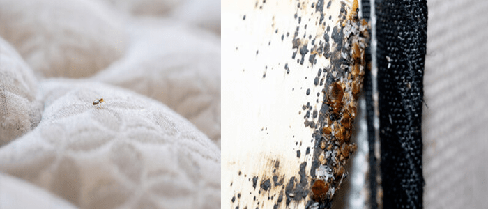 Reliable Bed Bug Control Service